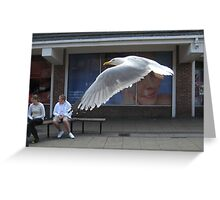 155 - BEDFORD STREET, NORTH SHIELDS - SEAGULL (D.E. 2008) Greeting Card