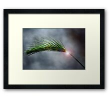 Spike in the Dark Framed Print