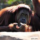 Orangutan by Jeff Ore