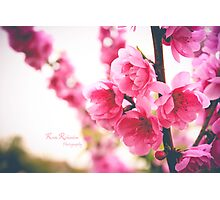 Flower Tree Photographic Print