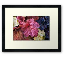 Wet Heuchera (Coral Bells) Leaves Framed Print