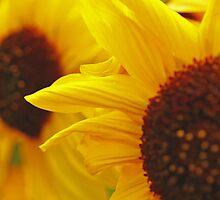 Sunflower Yellow by InTheMomentArt