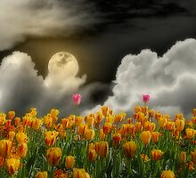 Tip Toe Through the Tulips by Christine Lake