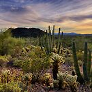 Sonoran Desert Sunset  by Saija  Lehtonen