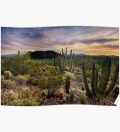 Sonoran Desert Sunset  Poster