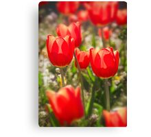 Red Tulips In The Sun Canvas Print
