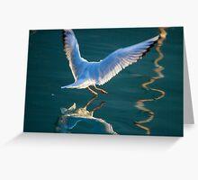 seagull flying on lake Greeting Card