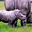 Rhinoceros Cow And Calf Portrait by Oldetimemercan