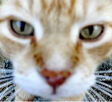 up close by Louise LeGresley