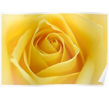 Macro Rose Bloom Flower Poster