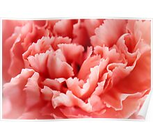 Peachy Red Carnation Bloom Poster