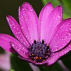 Purple Daisy. by Dipali S