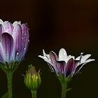 Three flowers by Dipali S