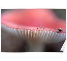 Russula persanguinea Poster