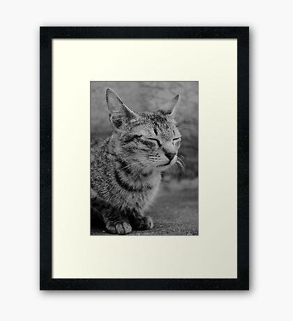 Josh The Cat Framed Print