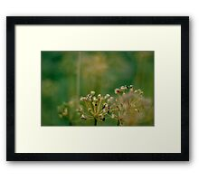 Vegetable Patch - a study - I Framed Print