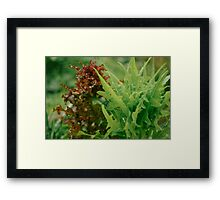 Vegetable Patch - a study - III Framed Print