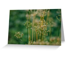 Vegetable Patch - a study - II Greeting Card