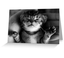 Precious Kitten Greeting Card