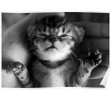 Precious Kitten Poster