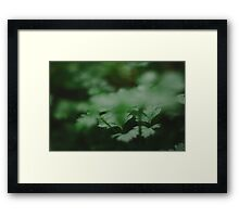 Vegetable Patch - a study - XVI Framed Print