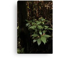 Leaves in the Forest Canvas Print