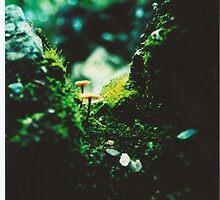 Forest Steps by strangerandfict