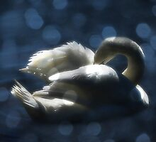 Beautiful Swan by Matthew Laming