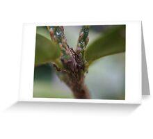 Lime Tree Greeting Card