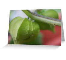 Cape Gooseberry Greeting Card
