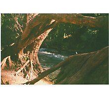 Hidden Paradise - a study - Pt I Photographic Print