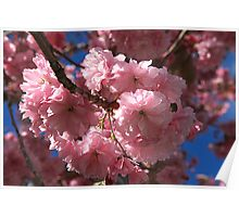 cherry blossom <3 Poster