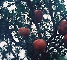 Pomegranate. by strangerandfict