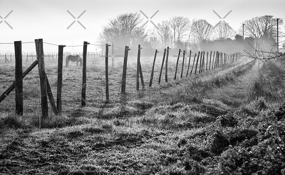 Equine Fence by Geoff Carpenter
