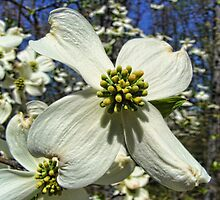 Spring in Missouri by barnsis