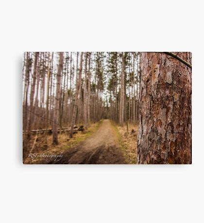 Forest Trails Canvas Print