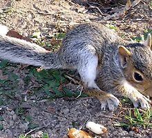 Nutty the Squirrel Strikes Again by Terry Schock