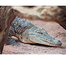Crocodile Photographic Print