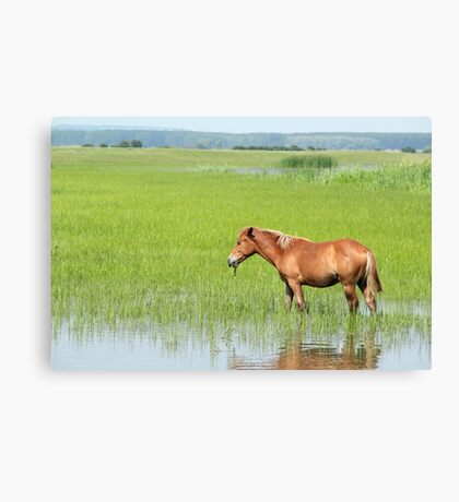 brown horse in pasture farm scene Canvas Print