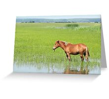 brown horse in pasture farm scene Greeting Card