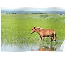 brown horse in pasture farm scene Poster