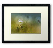 Cerastium fontanum subsp. vulgare  Framed Print