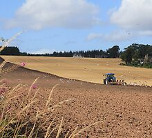 Black Isle Ploughing by Sandy Sutherland