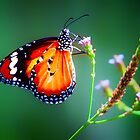 Viceroy... by Tracie Louise