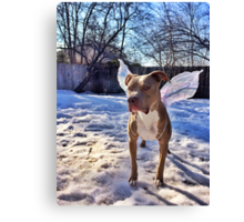 The Glare of the Murphyfly Canvas Print