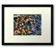 ©NS Fishes And Leafs IIA Framed Print