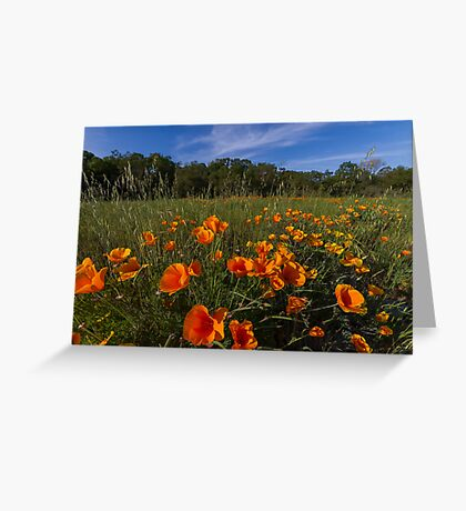 Poppies!! Greeting Card