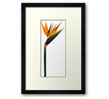 ONE FLOWER Framed Print
