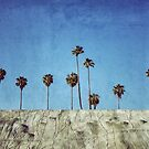 Bluff Palms by RichCaspian