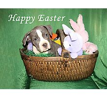 Am I An Easter Bunny ? Photographic Print